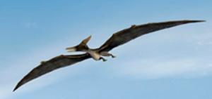 aguiva_flight