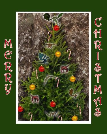 MtDrago_Christmastree_2015